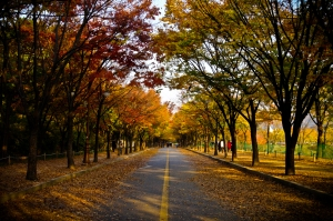 autumn-leaves-trees-korea-road-colors-royalty-free