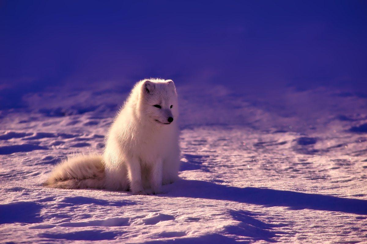 Arctic fox | Masterflex Hoses