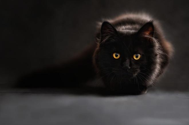 Cat - Hose
